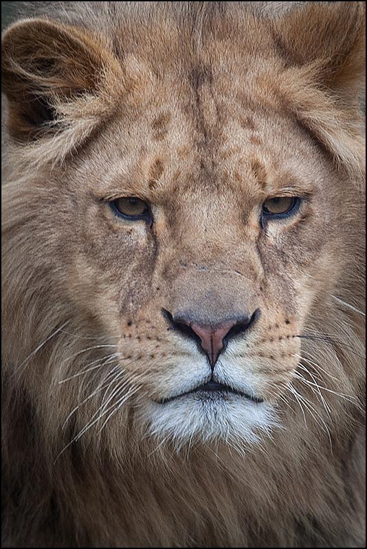 leeuwin-1