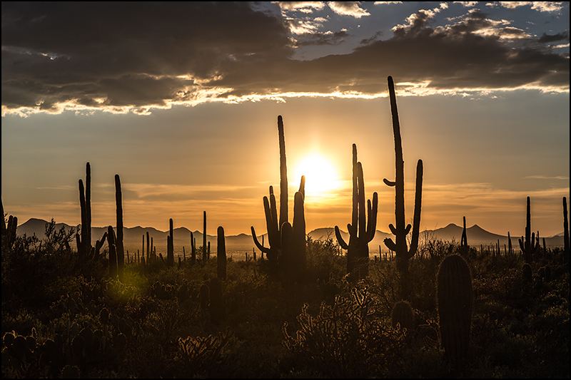 saguaro-national-park-1
